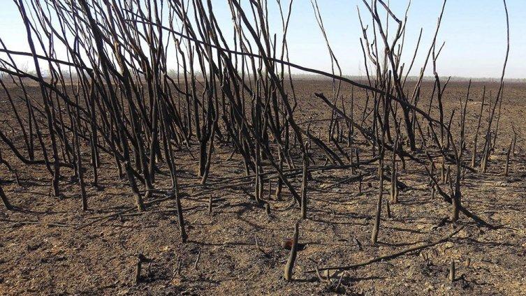 Buenos Aires declara la emergencia ambiental en la zona del Delta del Río Paraná